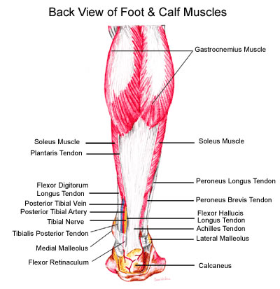 nov2012_foot_calf_back_view