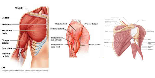 shoulder_pain_therapy_image2